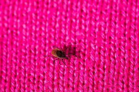 Tick close up