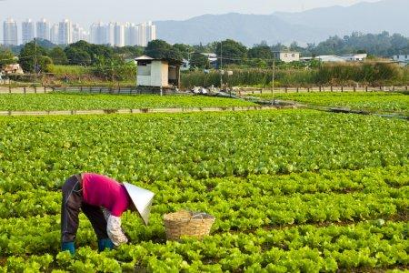 Photo pour Agriculteur travaillant sur un champ - image libre de droit