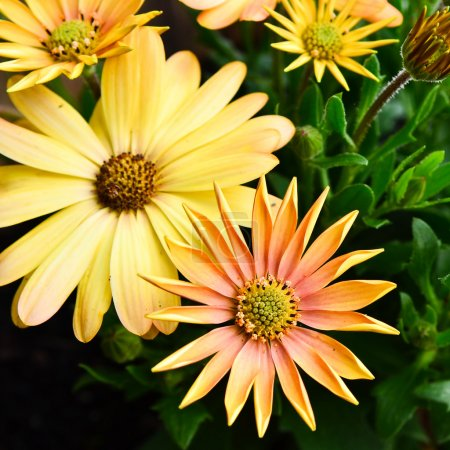 Yellow flowers growing in a flower pot