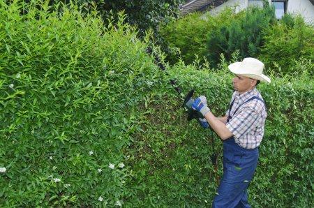 Gardening, cutting hedge