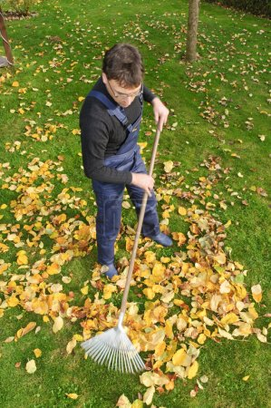 Gardening, raking leaves in the fall