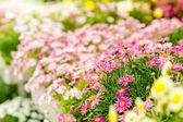 Flores de primavera en invernadero del centro de jardín