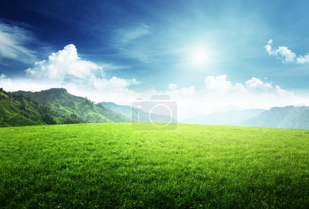 Photo for Field of grass in mountain - Royalty Free Image