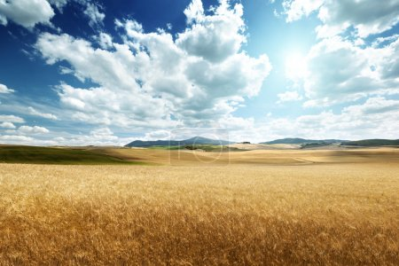 Photo for Barley hills Tuscany, Italy - Royalty Free Image