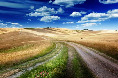 Photo for Road between the Fields of Tuscany, Italy - Royalty Free Image