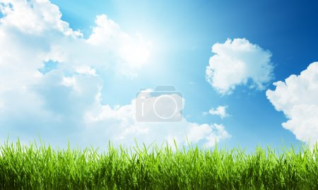 Photo for Grass at sunny day - Royalty Free Image