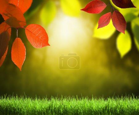 Photo pour Automne fond forêt - image libre de droit