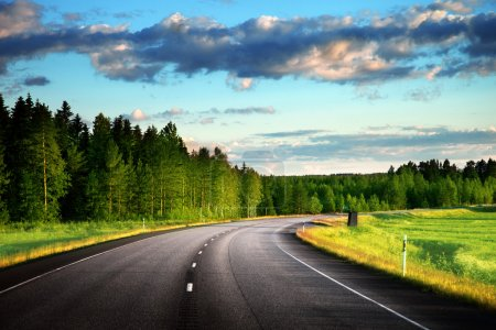 Photo for Asphalt road in forest - Royalty Free Image