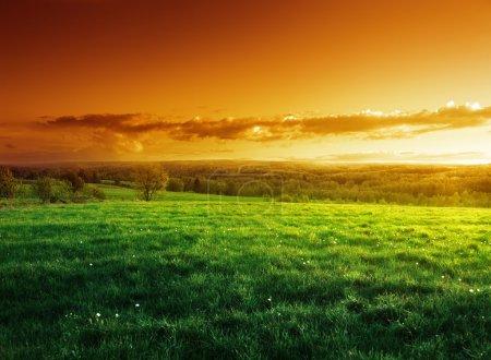 Photo pour Champ d'herbe printanière au coucher du soleil - image libre de droit