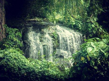 waterfall in jungles of Seychelles, Mahe island