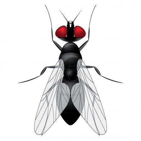 Illustration for Fly insect sketch symbol illustration. Housefly vector icon design. - Royalty Free Image