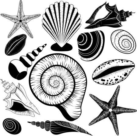Shells collection. Seashells vector set starfish f...