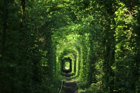 Photo for Natural tunnel of love formed by trees in Ukraine - Royalty Free Image