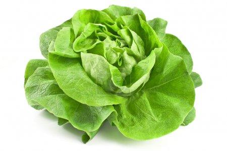 Fresh lettuce isolated on white...