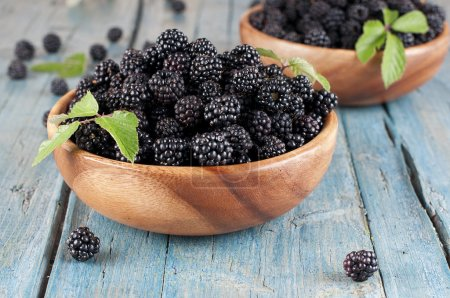 Sweet fresh blackberry in the wood bawl...
