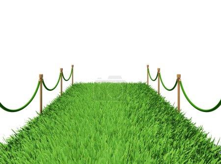 Path of green grass