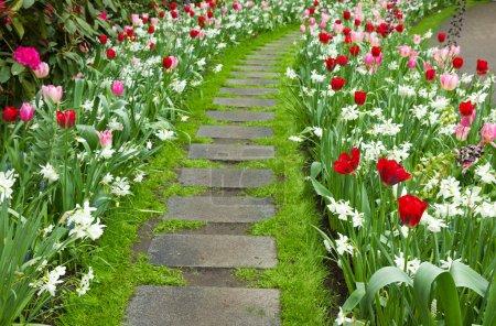 Stone walk way winding in a garden