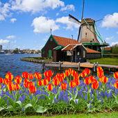 Dutch windmill of Zaanse Schans