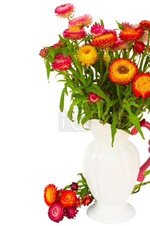 Photo pour Bouquet de fleurs colorées Everlasting frais dans un vase isolé sur fond blanc - image libre de droit