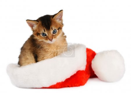 Merry Christmas Cat with Santa hat on white