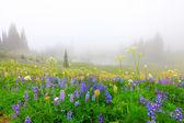Krásná kytice pole s jezero v horách se stromy