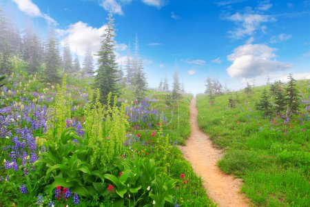 Mountain trail with wild flowers and trees.