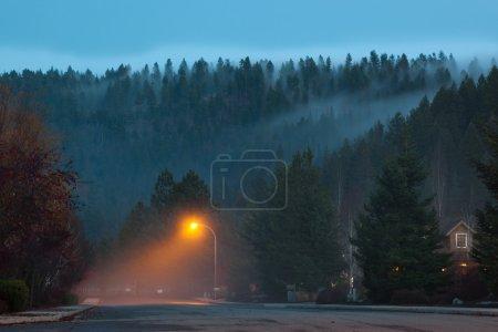 Photo pour Un banc de brouillard se glisse sur une montagne de grands arbres sempervirents et s'installe sous un lampadaire d'un quartier calme . - image libre de droit
