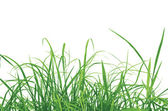 Green Grass Vector Illustration, EPS 10.