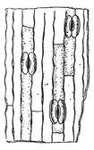 Stomata or Stoma vintage engraving