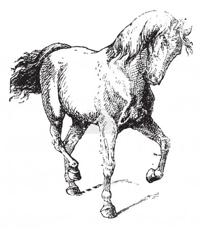 Illustration for Horse Training, vintage engraved illustration. Dictionary of Words and Things - Larive and Fleury - 1895 - Royalty Free Image