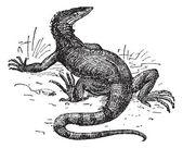 Monitor lizard vintage engraving