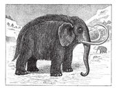 Mammoth or Mammuthus sp vintage engraving