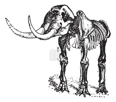 Mastodon or Mammut sp., vintage engraving