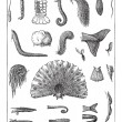 Various Tails, vintage engraved illustration. Dict...