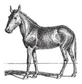 Mule or Equus mulus vintage engraved illustration Dictionary of Words and Things - Larive and Fleury - 1895