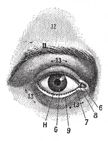 Illustration for External View of the Human Eye, showing pupil, iris, sclera and eyelid, vintage engraved illustration. Dictionary of Words and Things - Larive and Fleury - 1895 - Royalty Free Image