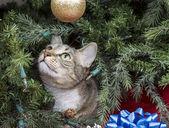 Cat Exploring Christmas Tree