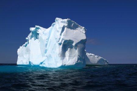 On Iceberg Alley already losses