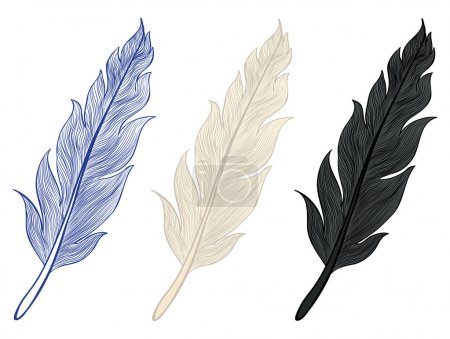 Illustration for A set of illustrations of feathers - Royalty Free Image