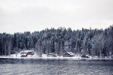 Small village in winter forest
