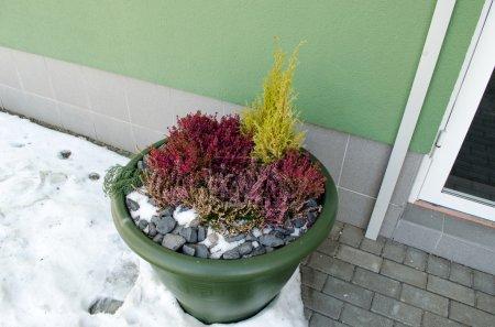 Foto de Pote plástico verde grande de la flor con piedras decorativas de color lilas brillantes brezos y un poco de nieve a la puerta de la oficina - Imagen libre de derechos