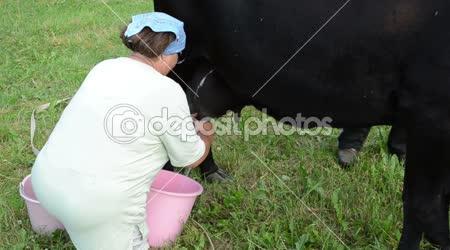 Farmer black cow milking
