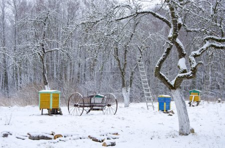 Winter time in old rural garden