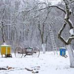 Winter time snow in old rural garden...