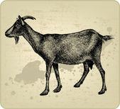 Goat with horns hand-drawing Vector illustration