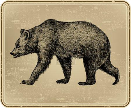 Illustration for Animal wild bear, hand-drawing. Vector illustration. - Royalty Free Image