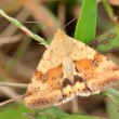 Moths insect on plant in wild nature, Luannan Coun...