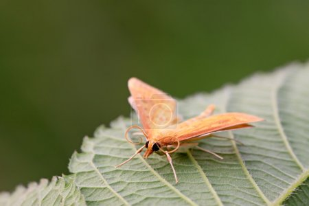 moths insect on leaf