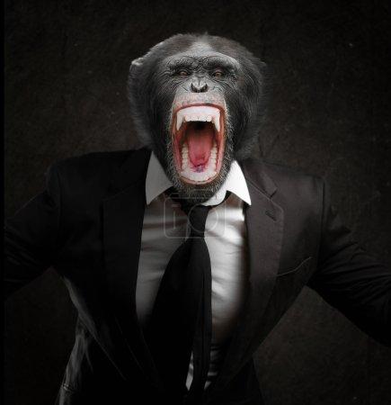 Photo pour Singe frustré en affaires costume isolée sur fond noir - image libre de droit