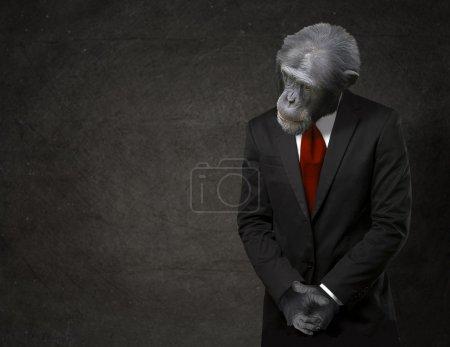 Photo pour Monkey Business en tenue de ville sur fond noir - image libre de droit